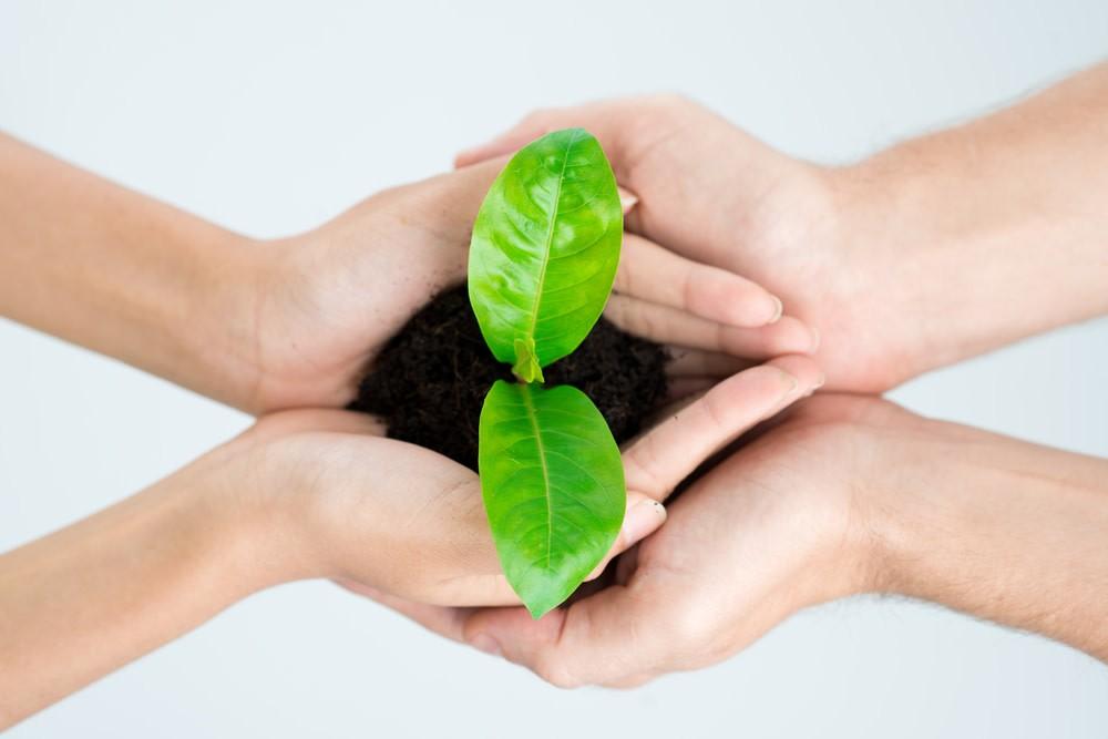 dos manos en una planta